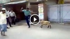 Funny Video - angry Sheep attacking police