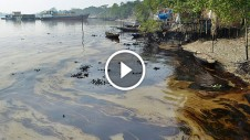 Sundarban - oil tanker sinks - oi spills all over