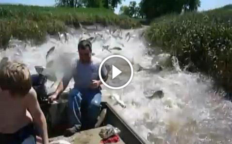 Amazing video showing fish jumping into the boat