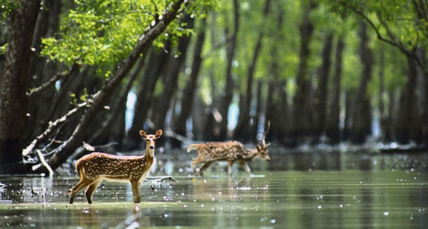 sundarbans the largest mangrove forest in the world
