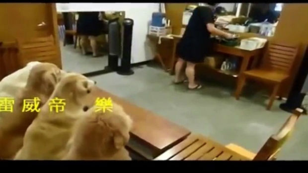disciplaine-dogs-world