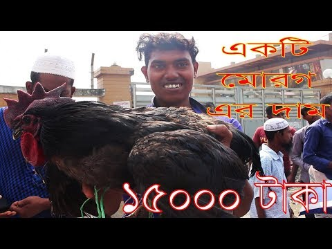 Alive Chicken Market | Travel Bangla 24 | Chicken Market In Bangladesh