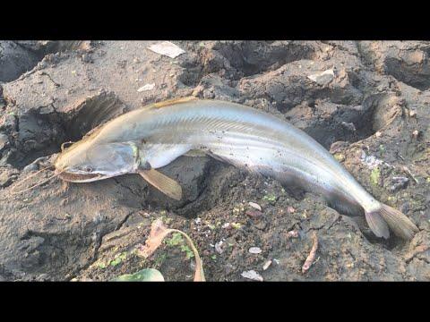 🐠 Fishing In Bangladesh   🇧🇩 Village Life Golapganj   Funny Sylhet Travel VLOG