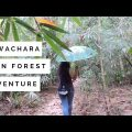 To Explore Lawachara Rain Forest in Sylhet, Bangladesh