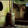 CID – ACP in Danger – Episode 985 – 3rd August 2013