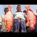 Bizarre Bangladesh!! Uncovering Chittagong's Food Secrets!!