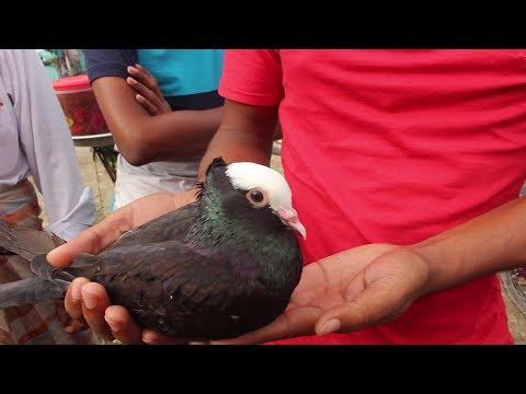 Pigeon Hat In Bangladesh | Travel Bangla 24 | Pigeons For Sale