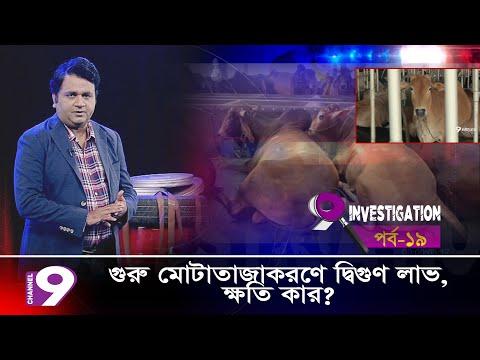 গরু মোটাতাজাকরণে দ্বিগুণ লাভ, ক্ষতি কার? |  9 Investigation | Episode – 19