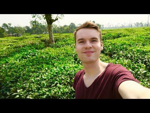 BANGLADESH'S GORGEOUS TEA FIELDS, SREEMANGAL 🇧🇩