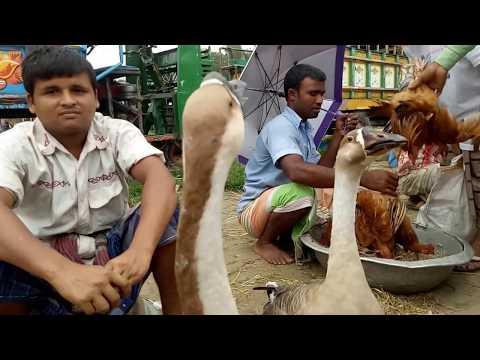 Largest Village Market | Bangladesh | Travel Vlog