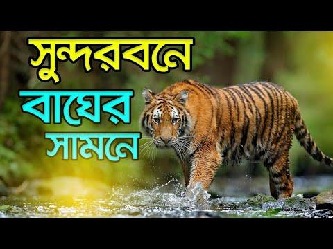সুন্দরবনে  ভয়াবহ অভিজ্ঞতা  । World's Largest Mangrove Forest । Sundarban Bangladesh