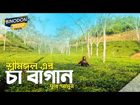 Tea Garden | Sylhet | Travel Video 2020 | Beautiful Bangladesh | Binodon Media Tour